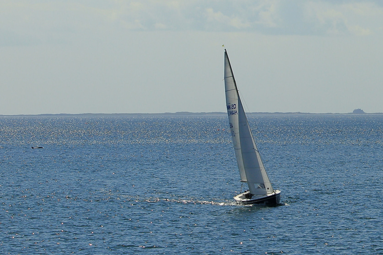 Sailing boat with dolphin